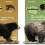 Ten Ways to Avoid Bears While Camping