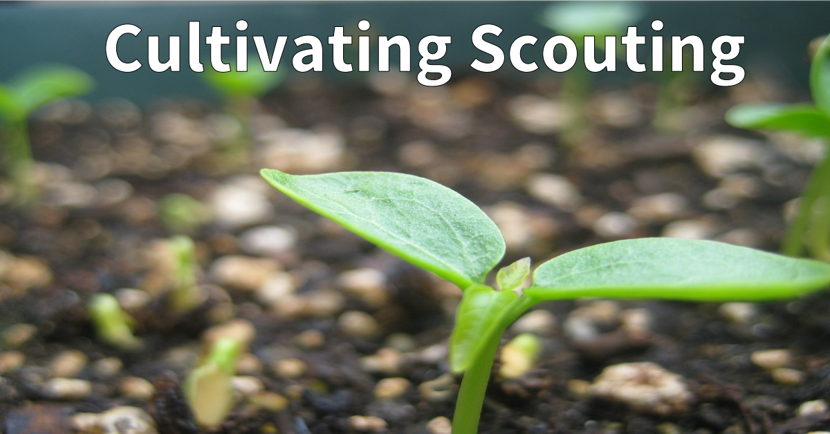 cultivating scouting b