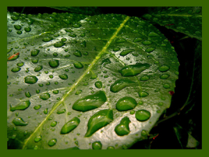 Green-Leaf-with-Drops-by-Frapestaartje