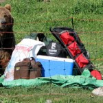 Electric Fence for Bear Country