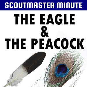 eagle and peacock
