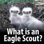 What is an Eagle Scout?